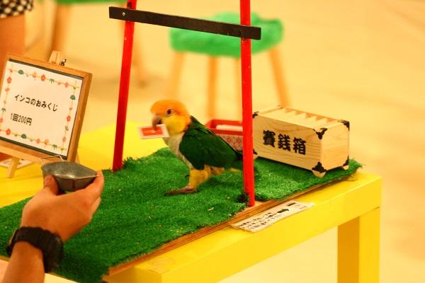 Moff animal cafe インコおみくじ2